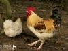 Animals at Kilmokea Country Manor, New Ross, Wexford